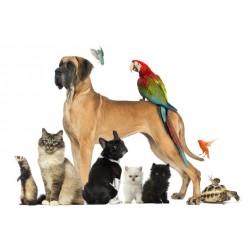Tienda de Animales y MascotasAnimales